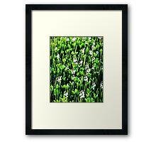 Dawn Reeds Framed Print