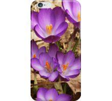 Crocuses iPhone Case/Skin