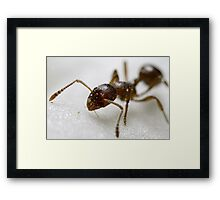 Extreme macro Ant on a clematis petal Framed Print