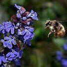 Bee Flying by AnnDixon