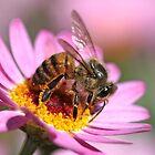 Bee my honey by Rina Greeff