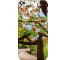 Royal Poinciana or flame tree blossom in Thailand iPhone Case/Skin