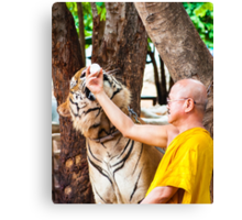 Buddhist monk feeding with milk a bengal tiger  Canvas Print