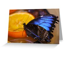 Vibrant Butterfly Greeting Card