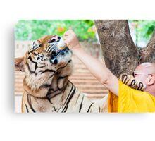 Buddhist monk feeding with milk a bengal tiger  Canvas Print