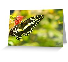 Friendly Butterfly Greeting Card