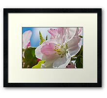Beautiful Spring Apple Blossom Framed Print