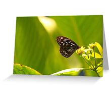 Pensive Butterfly Greeting Card