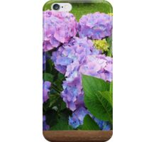 Beautiful Hydrangea Blossoms - Blue, Purple and Pink iPhone Case/Skin
