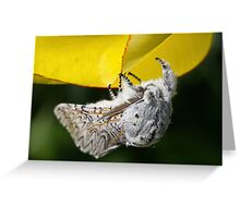 Furry Puss Moth on yellow Tulip Greeting Card