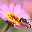 Hoverfly – Sweefvlieg by Rina Greeff