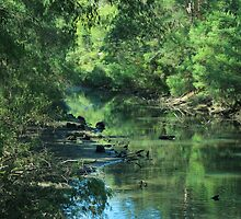 Rivers and Lakes of South Western Australia by Elaine Teague