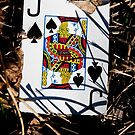 justice for jack of spades by blacqbook