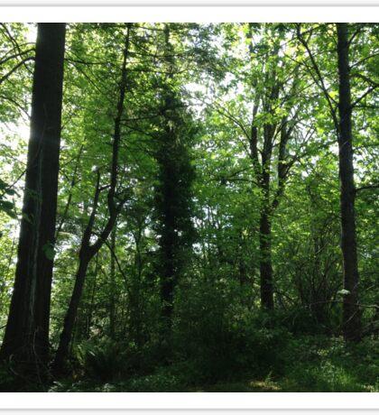 Forest Scene Sticker