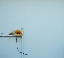 Lonely sunflower by whitewust