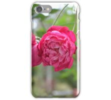 3 Knockout Roses iPhone Case/Skin
