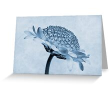Chrysanthemum Cyanotype Greeting Card