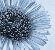 Cyanotype Aster with Textures Sticker