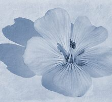 Linen Watercolour Cyanotype by John Edwards