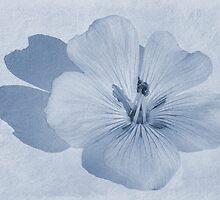 Linen Watercolour Cyanotype by John Edwards