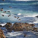 Flight of the Puffins by Sandra Fortier