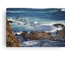Flight of the Puffins Canvas Print