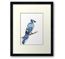 Watercolor Blue Jay Framed Print