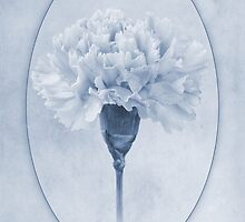 Carnation Cyanotype by John Edwards