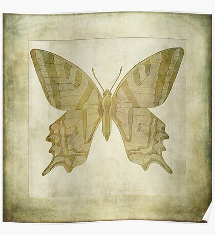 Butterfly Textures Poster