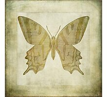 Butterfly Textures Photographic Print