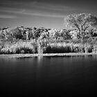 Where Prairie Meet Water Infrared by Adam Bykowski