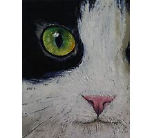 Japanese Bobtail Cat Photographic Print