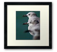 Bokehliceous Gulls Florida Keys Framed Print