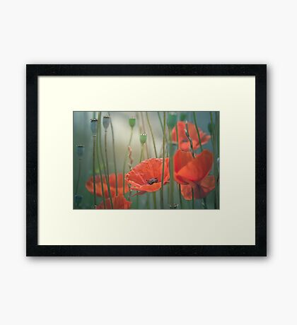 Picturesque poppies Framed Print