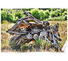 Deadwood on Cherry Creek Trail 4  Poster