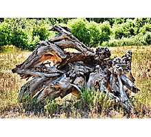 Deadwood on Cherry Creek Trail 4  Photographic Print
