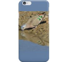 Emerald Spotted Dove - African Wild Bird Background - Reflection of Green and Blue iPhone Case/Skin