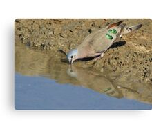 Emerald Spotted Dove - African Wild Bird Background - Reflection of Green and Blue Canvas Print