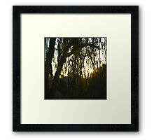 Willow Silhouette Framed Print