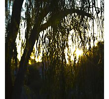 Willow Silhouette Photographic Print