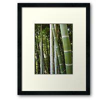 Bamboo grove, bamboo forest natural green background, Georgia, Batumi Botanical Garden Framed Print