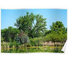 Pond on Cherry Creek Study 1  Poster