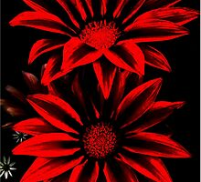 Red&Black Flowers by poppyflower