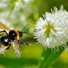 Flight Of The Bee by Andrew Pounder