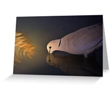 Cape Turtle Dove - African Wild Bird Background - Drinking Gold Greeting Card