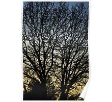 Magestic Tree Closeup Poster