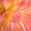 Pink and yellow by KMorral