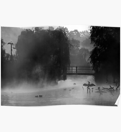 Misted Cormorants Poster