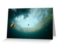 Autumn colours from below the water Greeting Card