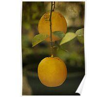 Fruit Of The Orange Tree Poster